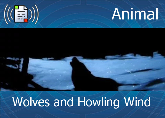 km-atmo-animal – wolves and howling wind
