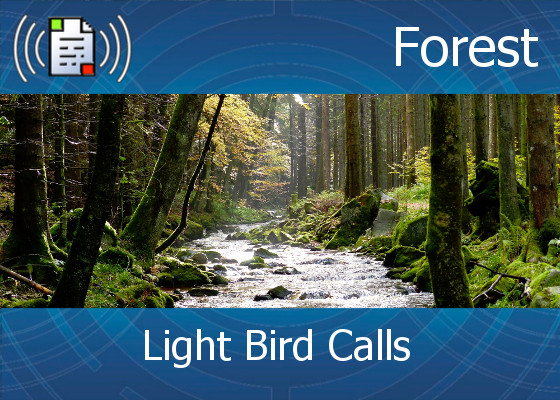 km-atmo-forest – light bird calls