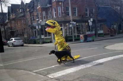 Yellow dinosaur walking black dog on a Toronto street.