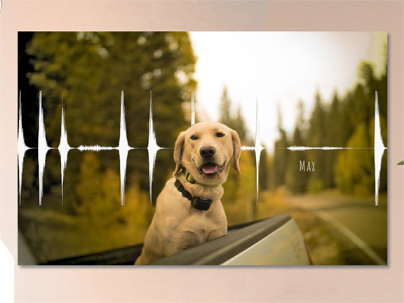 Dog Bark Soundwave with Photo