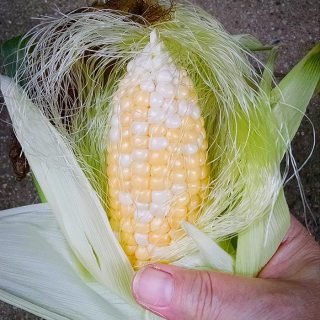 Lunken Market, Preserving Corn | SoupAddict.com