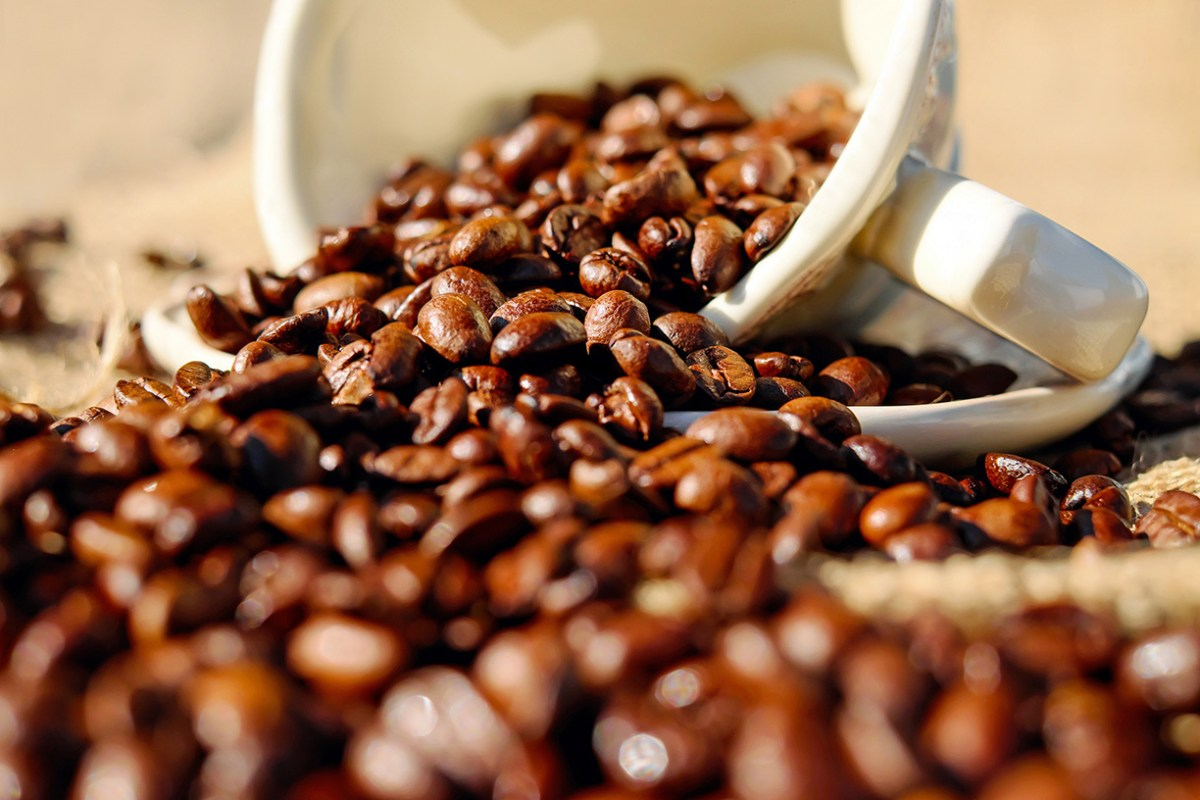 frische Kaffeebohnen geschüttet aus einer weißen Porzellantasse