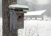 snow-covered bird house