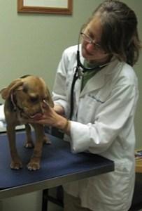 Dog examination at Veterinary Medical Center