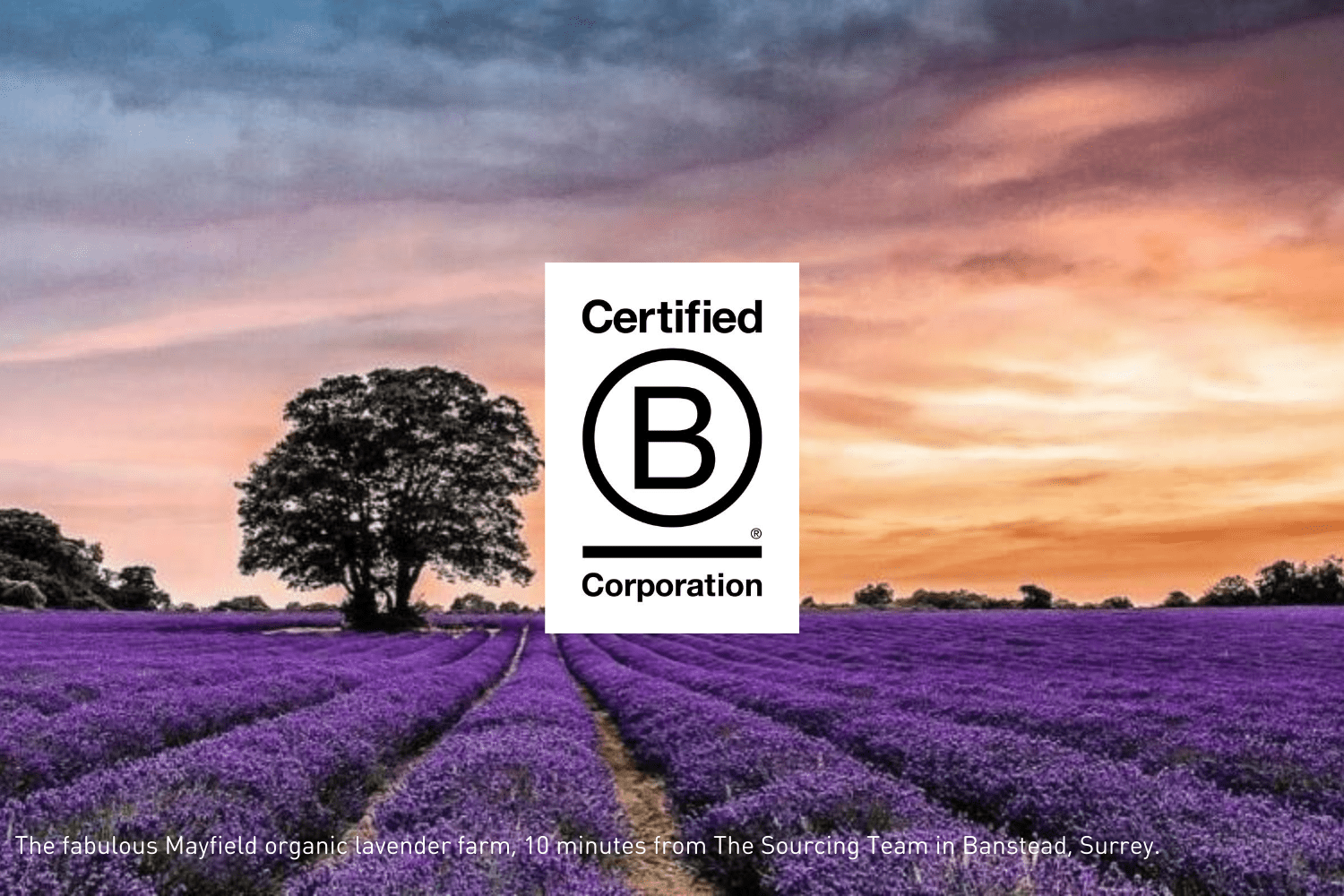 The Sourcing Team are delighted to become certified B Corp
