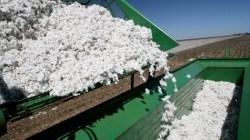Cotton Prices Rise 9 Percent April