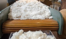 Fukushima's Rehabilitated Cotton Fields are Reviving a Fallow Japanese Industry