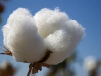 New Textile Factory in Uganda to Benefit Cotton Farmers