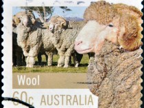 Wool Prices Rise 1.5% in February