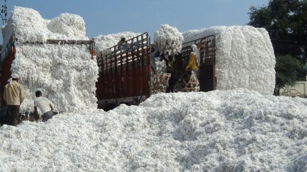 Better Cotton Initiative ISEAL Alliance membership