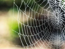 Spider Silk Manufacturer to Open At Least Two More Production Plants