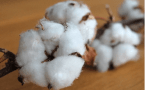 The Top 10 Alternative Facts About Cotton and Why They're Wrong