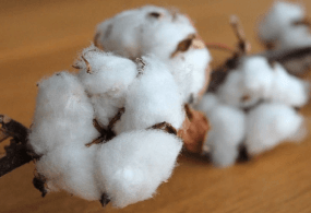 Harvey Drives Up Cotton Prices in Last Days of August