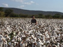 Target Sets Goal of 100 Percent Sustainable Cotton by 2022