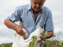 C&A Pledges to Source More Eco-Friendly Cotton by 2020