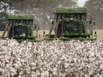 Exports and Soft Dollar Deal US Cotton Strong Hand, but Wild Cards Could Shuffle Deck