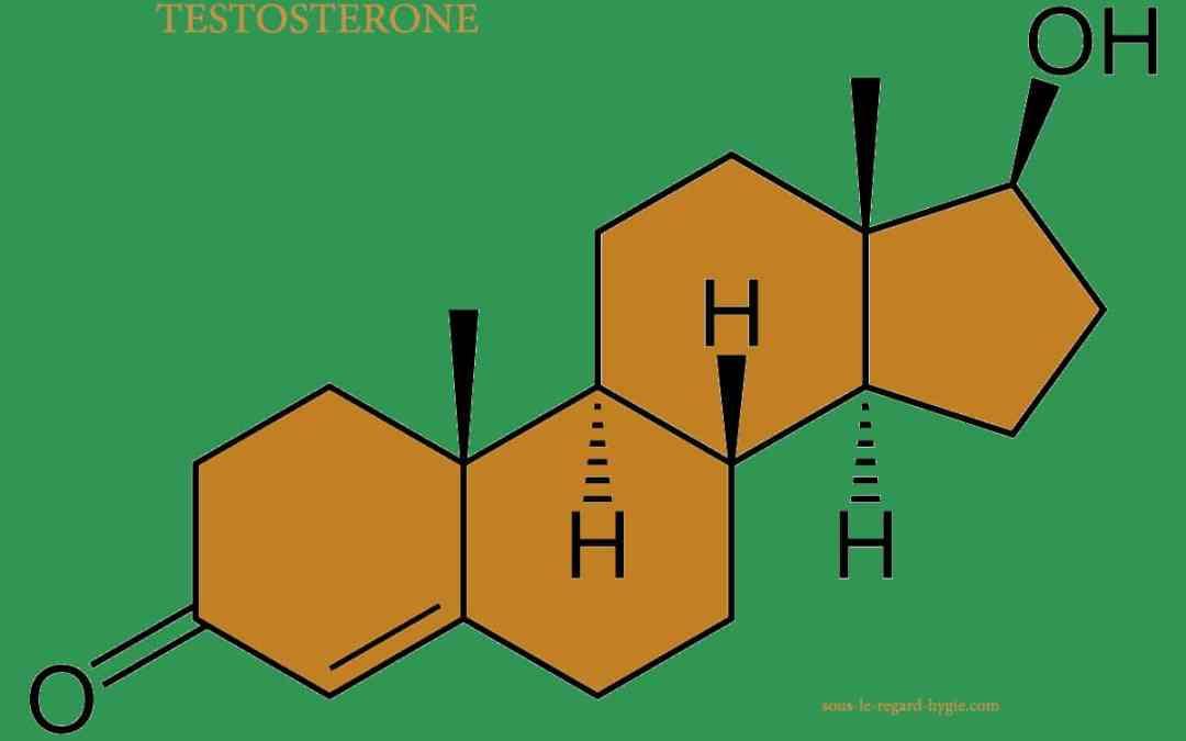 Testostérone - Oestrogène