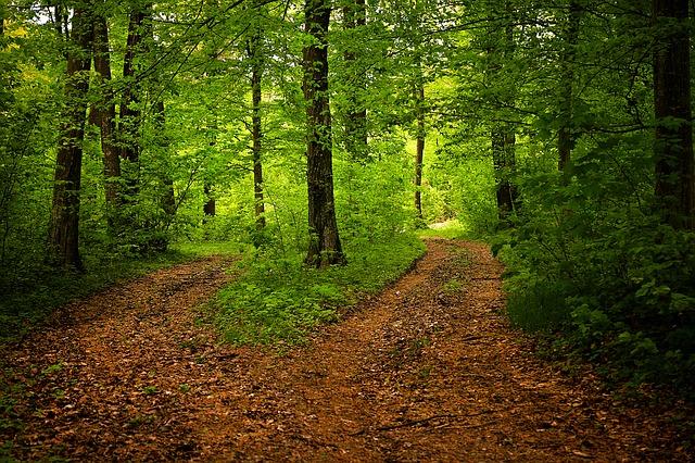 forêt-arbre-chemin-verdure-vert-sentier-opposer