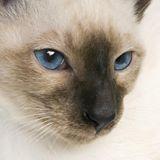 Courvoisier Marlène-chat