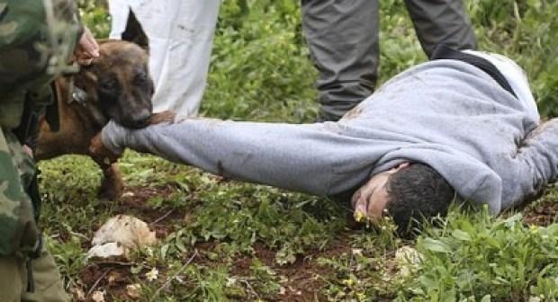 عاجل بتيزنيت: عصابة مدججة بالسلاح وكلب شرس تسلب مواطنا أمواله