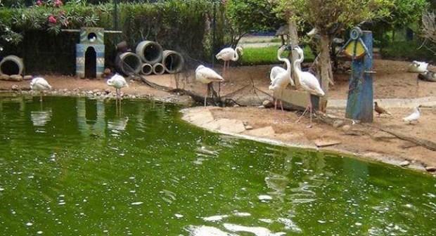 العمران بوادي الطيور