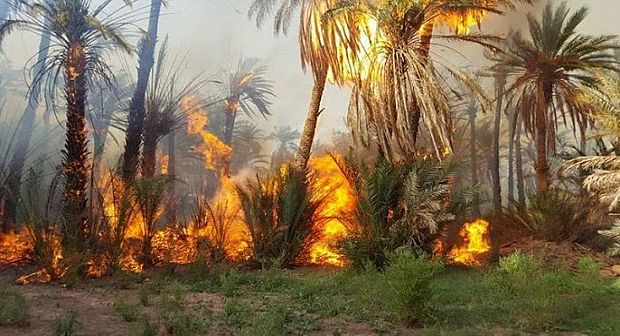 زاكورة: حريق بواحة يأتي على العشرات من اشجار النخيل