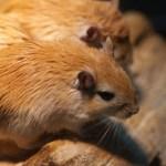 ワイヤレスマウスの電池の寿命は7ヶ月だった。