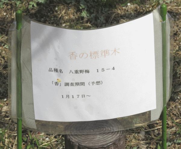 香りの標準木 掲示板