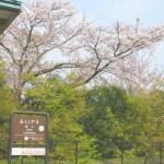 平日のセミリタイア小旅行(京都・嵐山の桜)