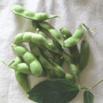 家庭菜園の枝豆を収穫したセミリタイアの夏【2019】