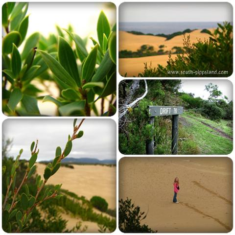 Collage of photographs taken of the sand dunes on the Drift Track at Wilsons Promontory National Park