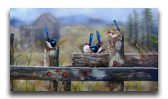 Meeting-on-the-old-fence-BlueWrens-Emily-Koenders