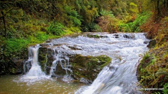Turtons-Creek-Reserve (23)