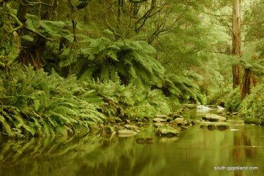 Turtons-Creek-Reserve (7)