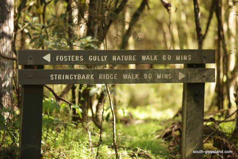 fosters-gully-walk-001