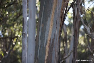 lilly-pilly-gully (23)