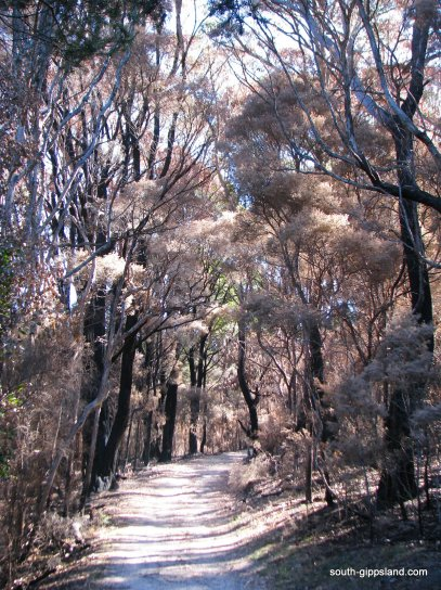 lilly-pilly-gully-fire-damage (7)