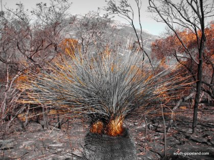 lilly-pilly-gully-fire-damage (9)