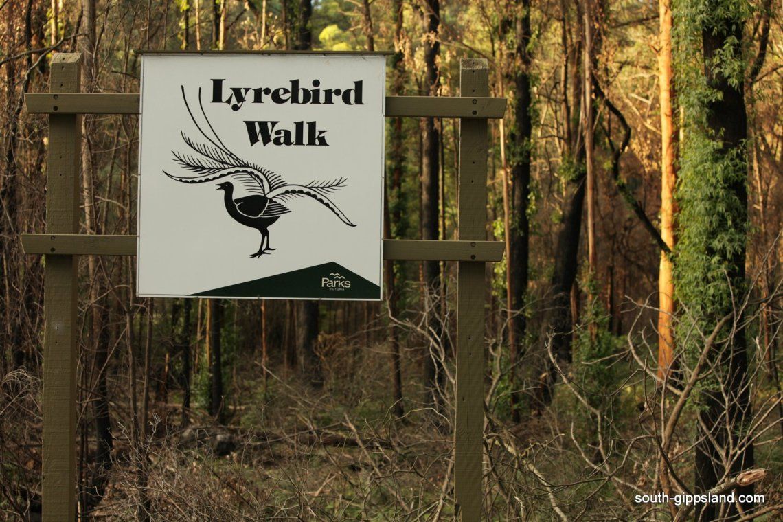 lyrebird walking track sign in bushland at Mirboo North