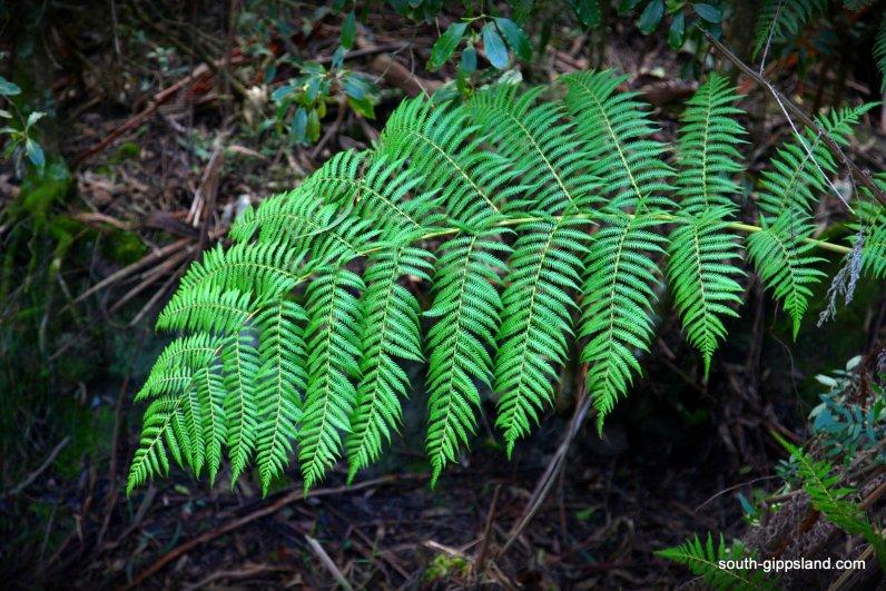 morwell-national-park-003