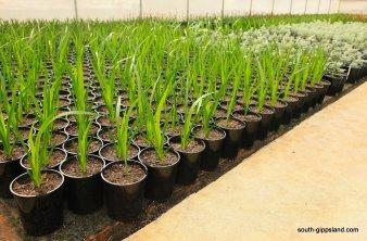 narkabundah-native-plant-nursery (2)