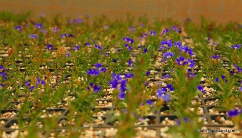 narkabundah-native-plant-nursery (20)