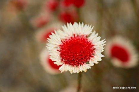 narkabundah-native-plant-nursery (26)