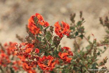 narkabundah-native-plant-nursery (43)