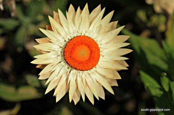 narkabundah-native-plant-nursery (50)