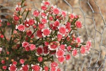 narkabundah-native-plant-nursery (54)