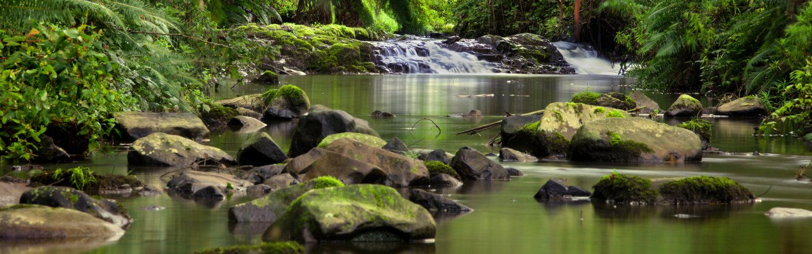 Turtons Creek Reserve