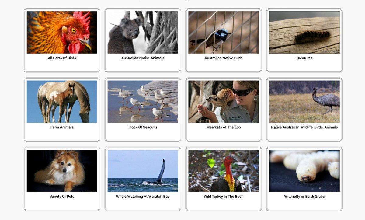 Wildlife, Animals, Creatures And Birds