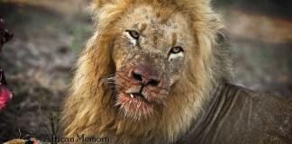 Pilanesberg big 5 Safari destination South Africa