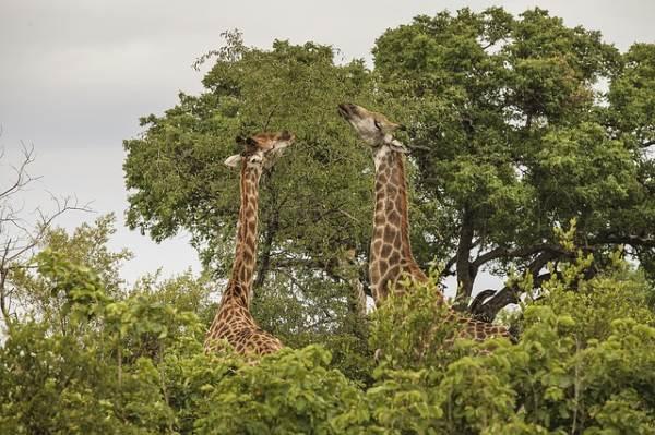 SA's parks dominates Best Safari Parks 2019 list